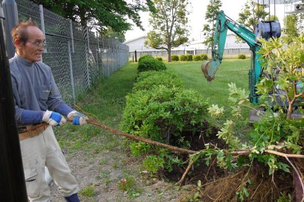 写真3:地上にあらわれた長さ2mの根っこ