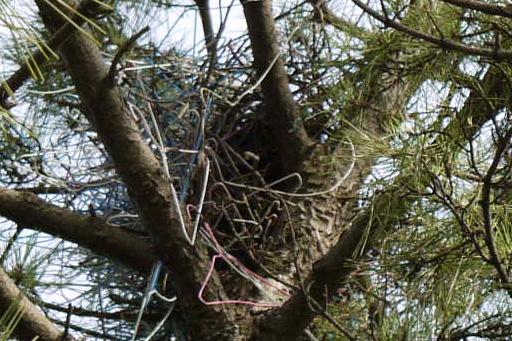写真2:実はカラスの巣が潜む