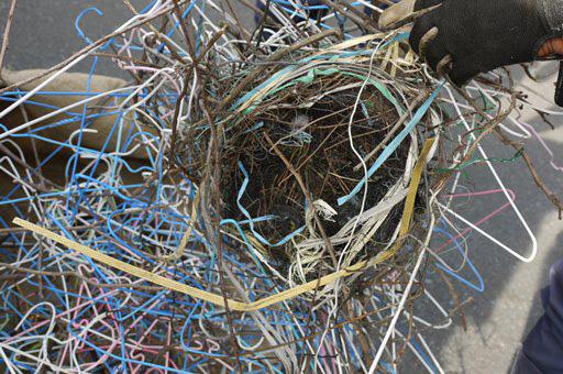 写真7:撤去したカラスの巣