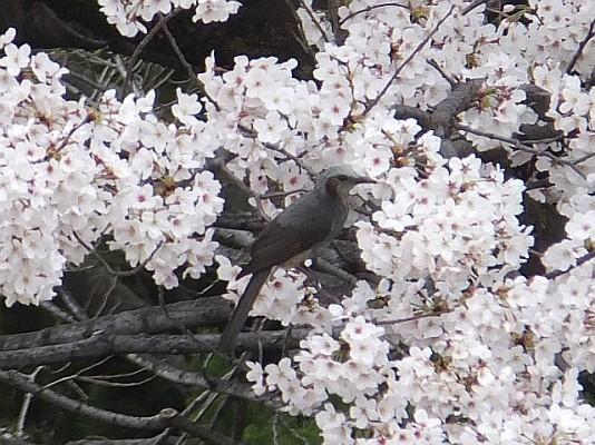 鳥は楽しんでいます_4月4日